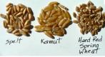 Alternative Grains